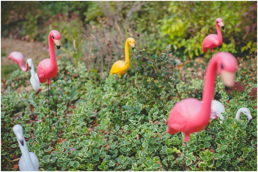 pink flamingo, same sex