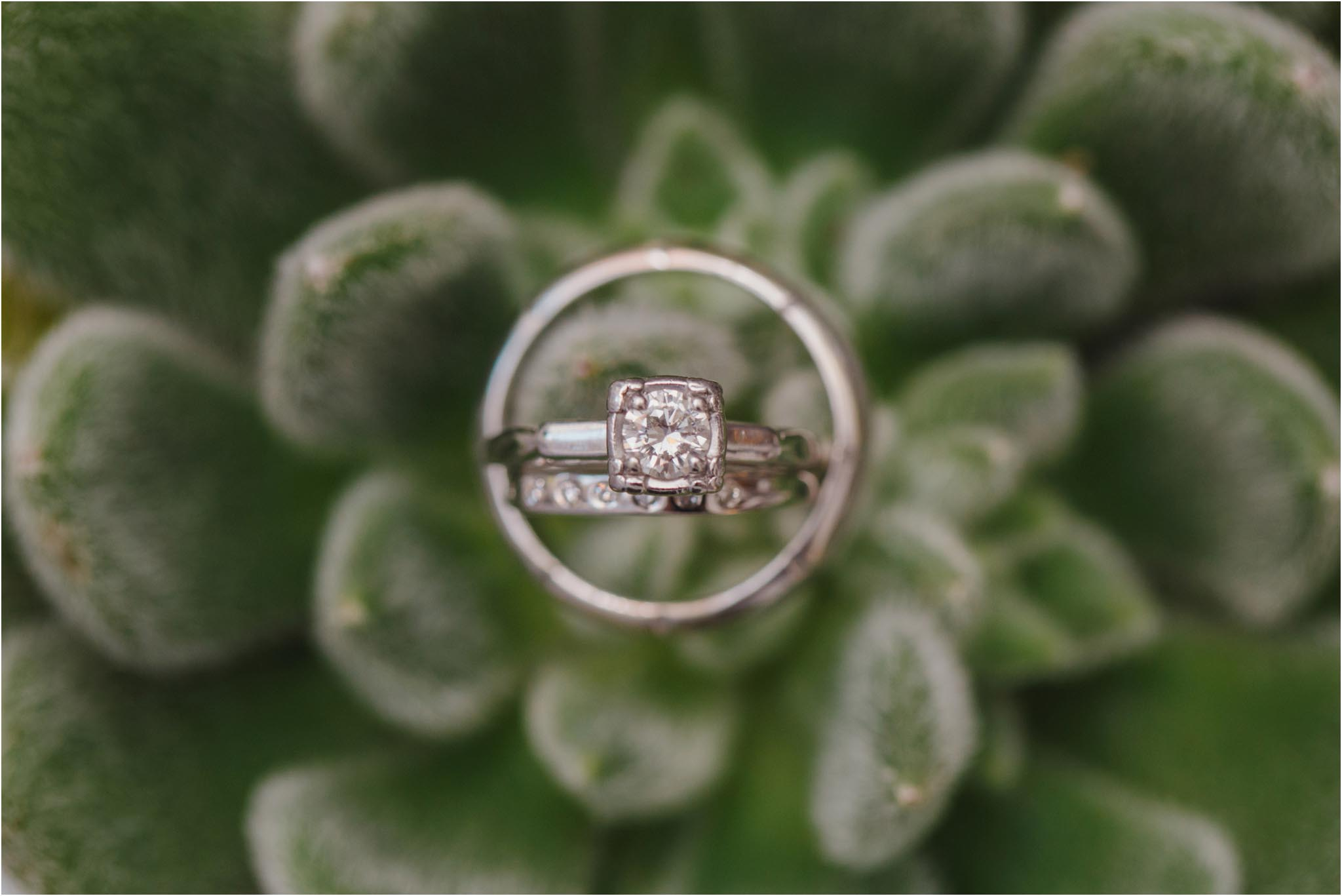 succulent, wedding bands, Philadelphia