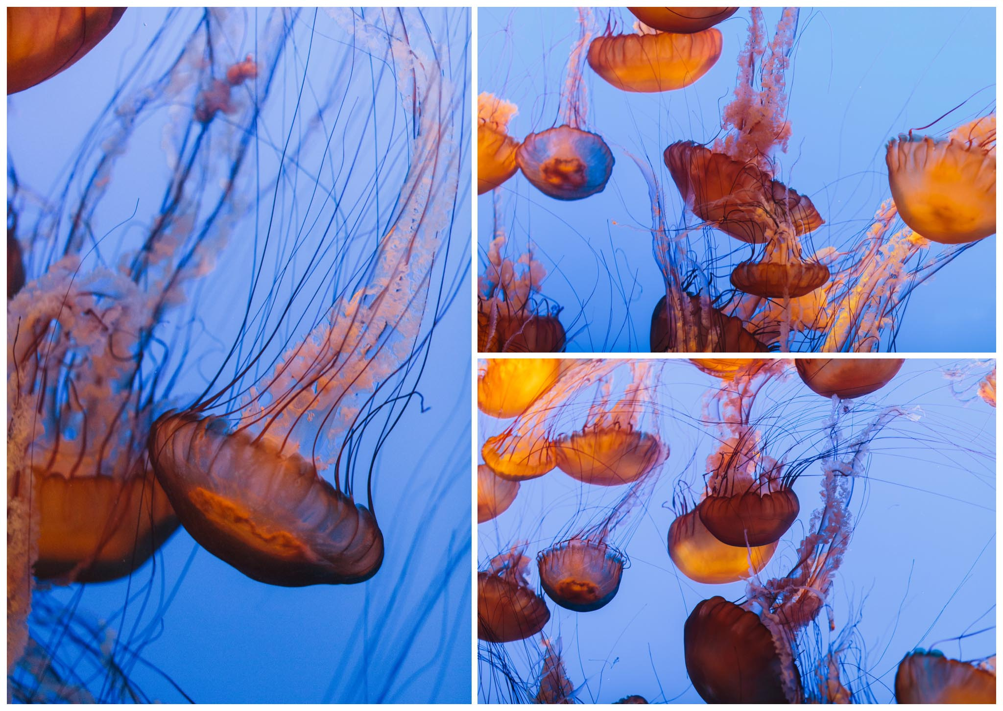 Monterey Bay Aquarium, wedding, California