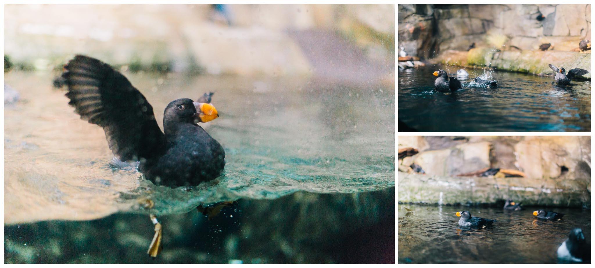 Monterey Bay Aquarium, wedding, California
