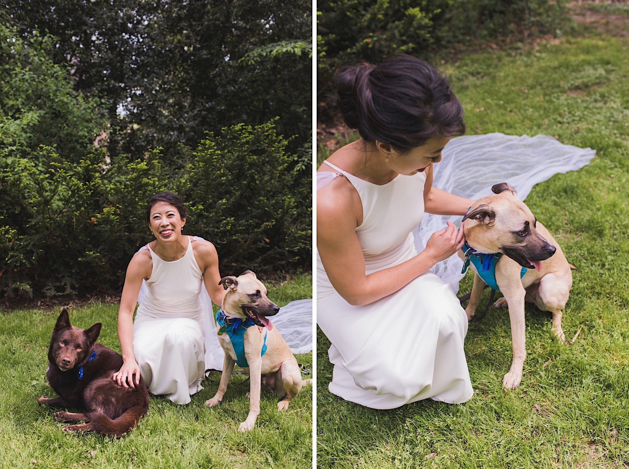 bride, dogs, wedding