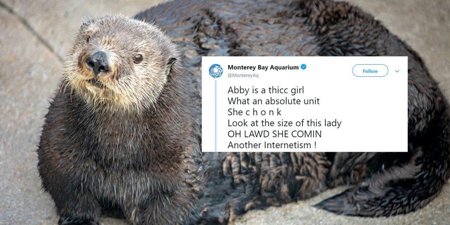 Monterey Aquarium, AAVE