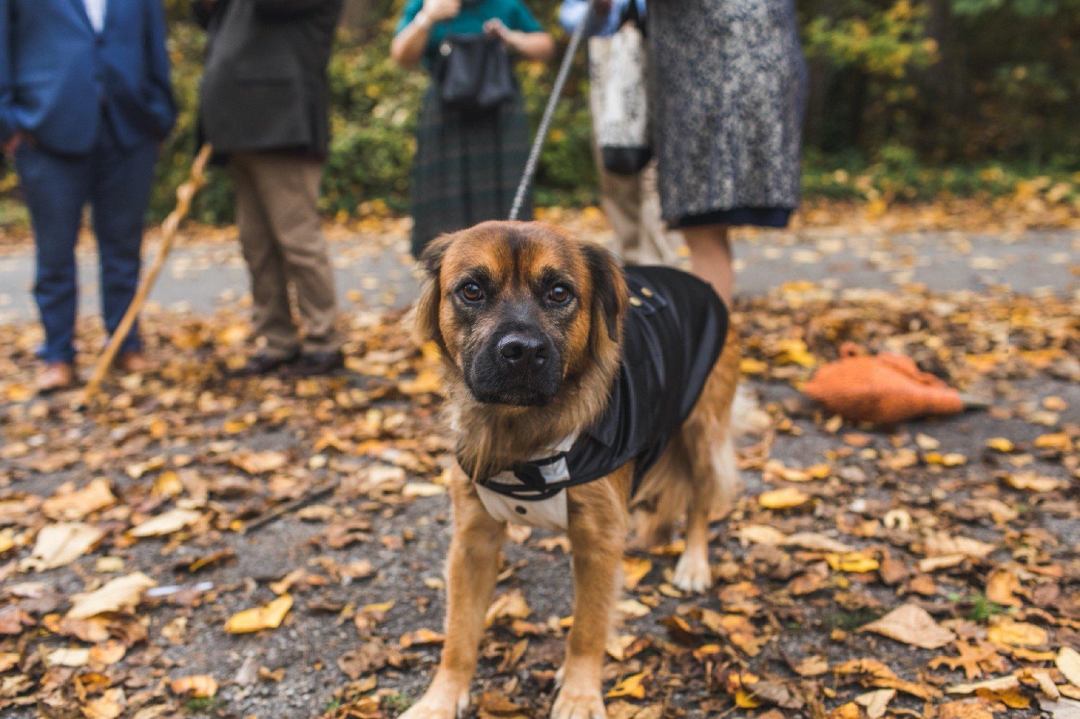 dog, portraits, microwedding, Philadelphia